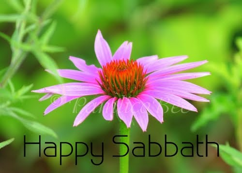 Pamlicobee photos greeting cards aceos happy sabbath cards happy sabbath cards now available m4hsunfo