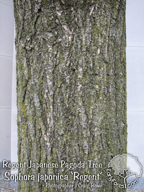 elm tree bark identification. elm tree bark identification.