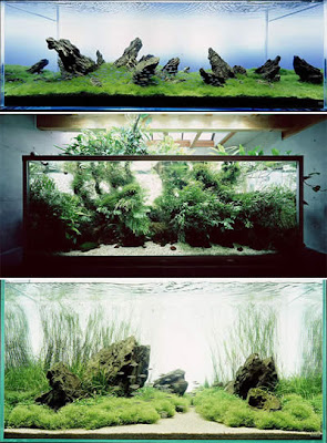 L'effet biophile d'un aquarium