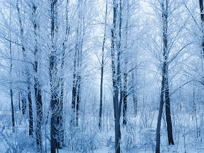 forest wallpaper. winter forest wallpaper