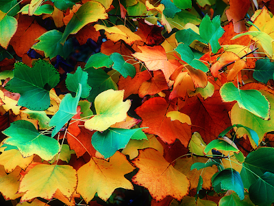autumn wallpaper. autumn leaves wallpaper
