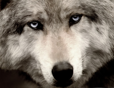 Save American Gray wolves