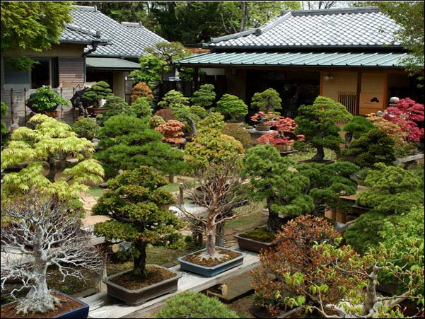 Bonsai questo piccolo grande banzai for Giardini giapponesi milano