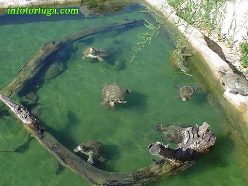 Planeta verde alcorc n tortuga leprosa y en mostoles for Filtro para estanque de tortugas