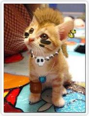 cat punk