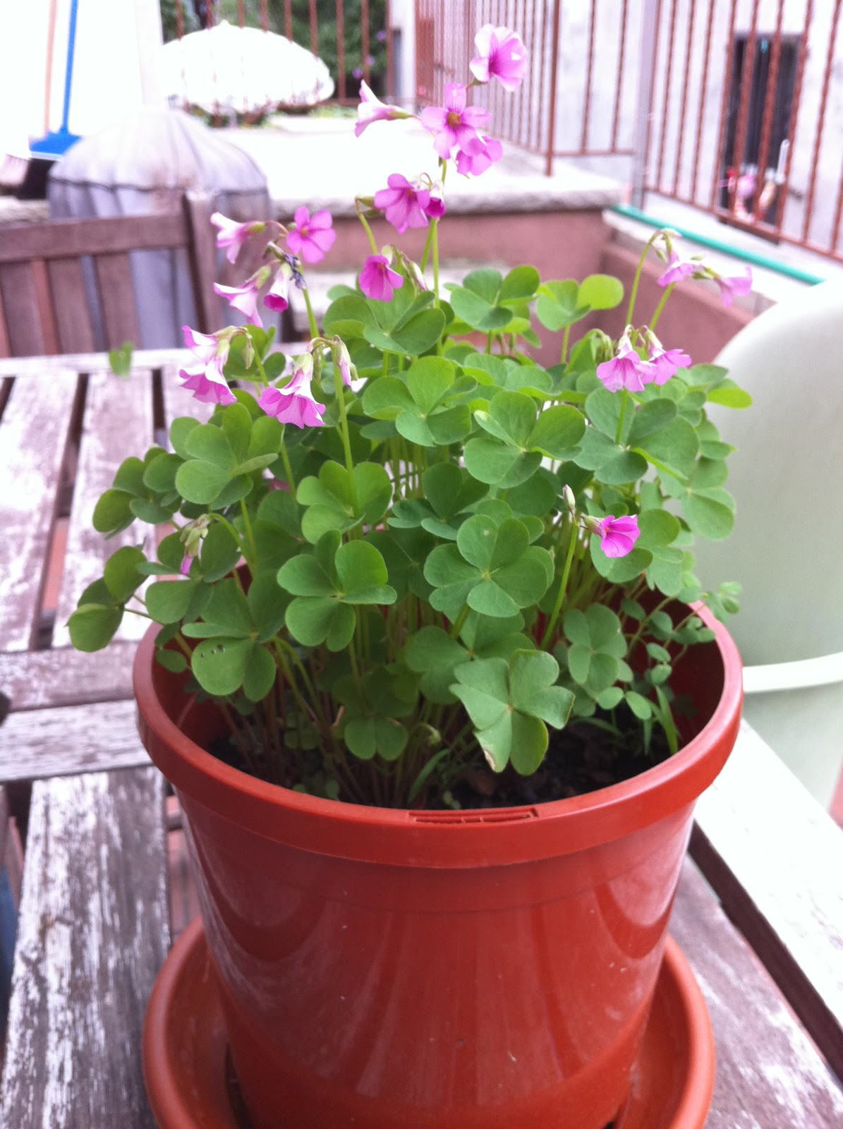 Plant Something A Family Shamrock Update