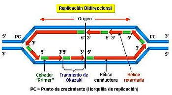 En la mayoría de los casos la replicación es bidireccional
