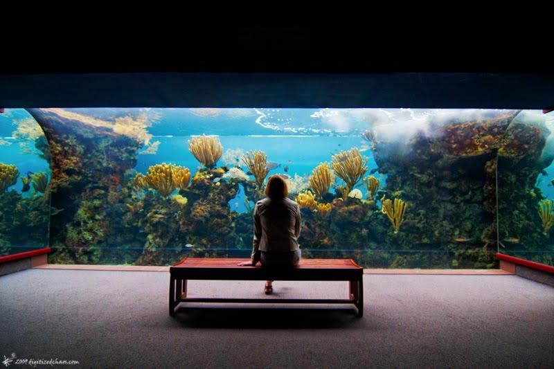 buy sell cheap best aquarium chandigarh panchkula mohali: June 2010