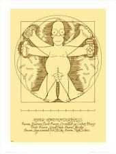Homer de Vitruvio