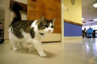 القط أوسكار في أحدد ممرات المستشفى