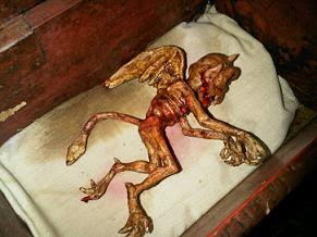 مخلوق مزعوم كان داخل صندوق في إحدى محلات بيع الأحجار الكريمة في أندونيسيا