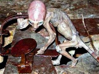 المخلوق الغريب الذي عثر عليه في المكسيك وقد وقع في فخ منصوب