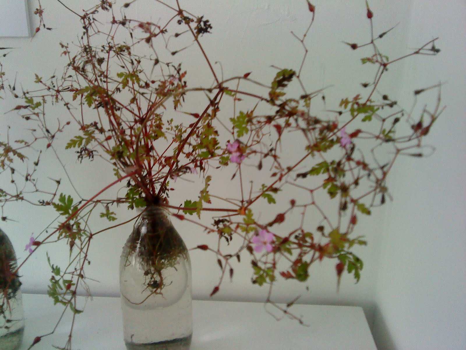 http://4.bp.blogspot.com/_UqJoWahooh0/TJN3S4KfSxI/AAAAAAAAATg/8gFndLkGwds/s1600/pink+flower+red+stem.JPG