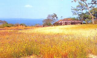 Small flower fields