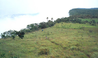 The scenery of field at Phu Khing summit