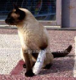 MICHINO, es el minino de un amigo veterinario de Entre Ríos