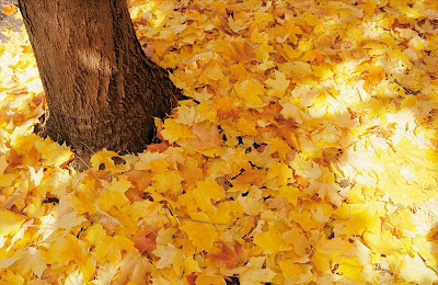 happyblog.mihanblog.com
