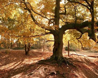 Autumn tree Photo عکس منظره(پاییز)
