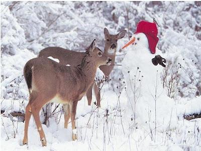 عکسهایی از جشن کریسمس