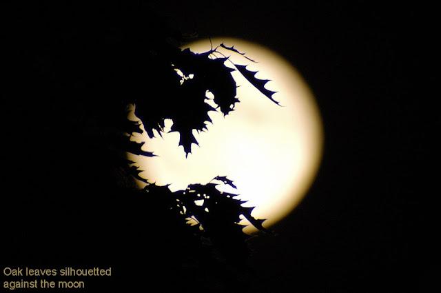 061403 1w Moon Lunar Images