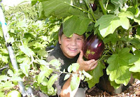hiding in the eggplant