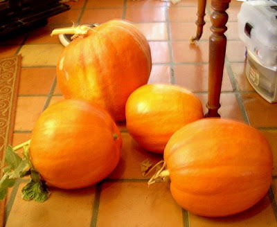 Ryder Green's Pumpkin Harvest