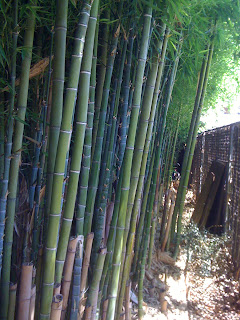 backyard bamboo grove
