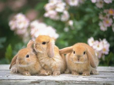 [Imagen: fotos-animales-2.jpg]