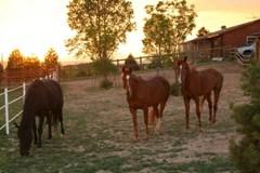 Strider, Cody & Tahoma 06/08