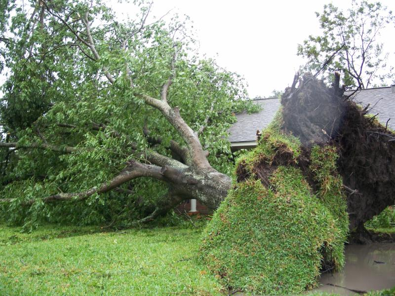 Spring Storms send reminder to Prune Trees image