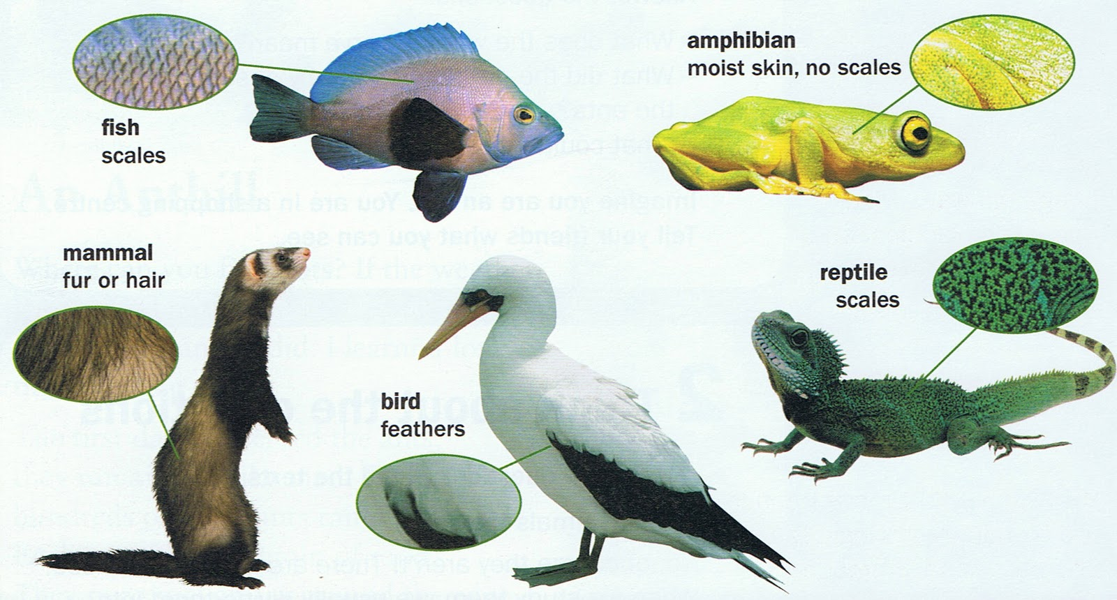 Science hernan cortes school talavera de la reina for Do all fish have scales