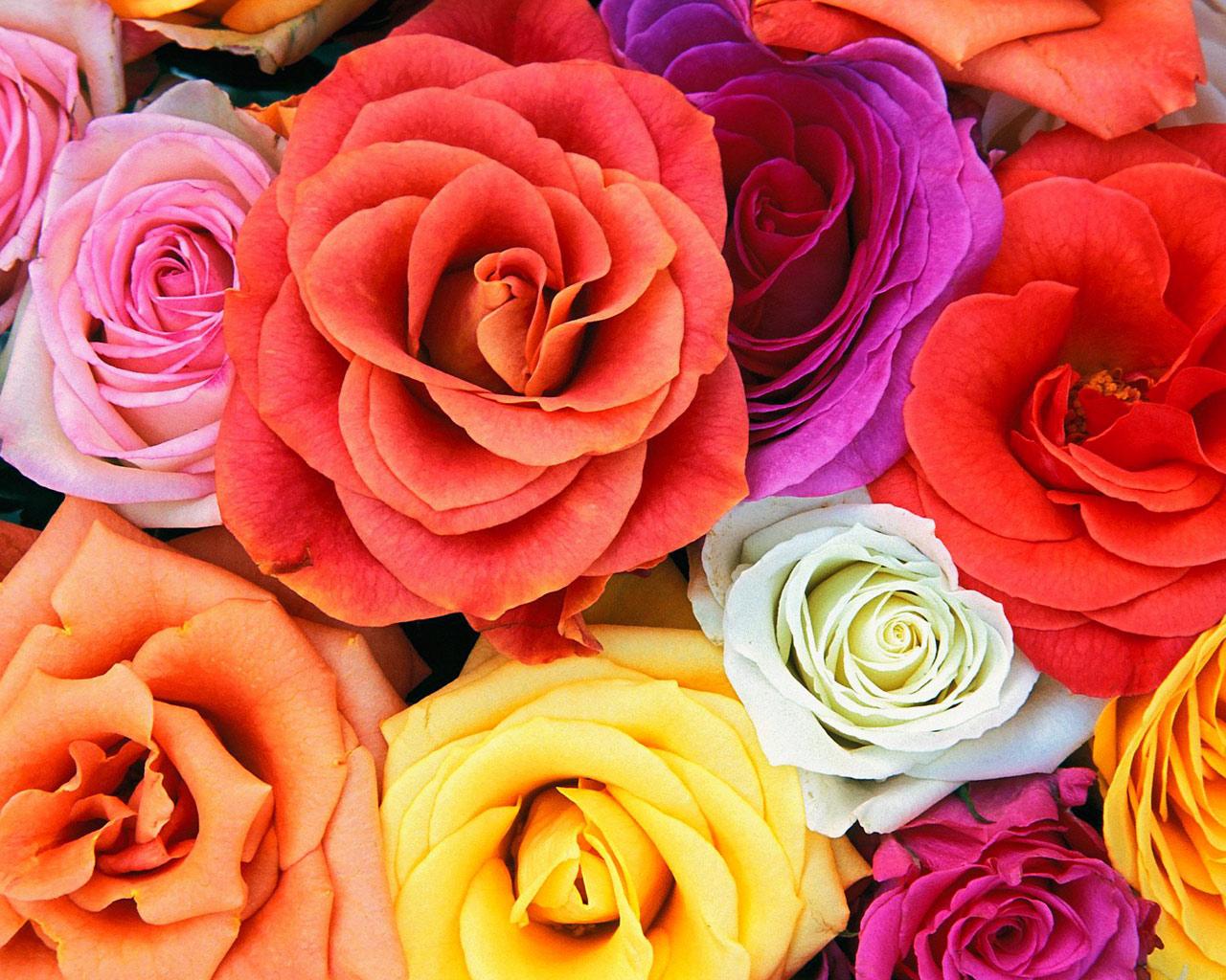Pershendetje  per vajzat e forumit! - Faqe 10 Roses,_Bunch_Of_Flowers