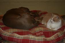 Nesta and Rasta
