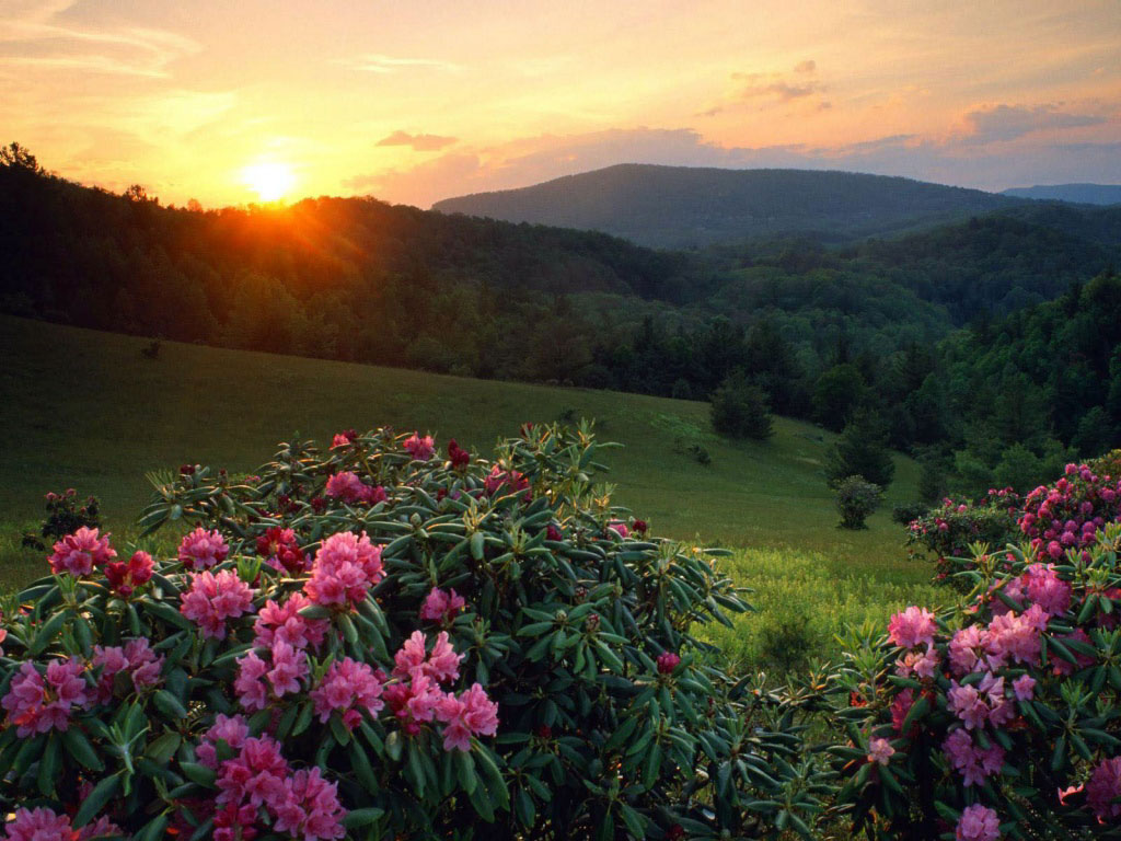 rosas no jardim de deus:quarta-feira, 19 de janeiro de 2011