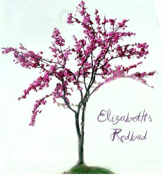 Elizabeth's Redbud