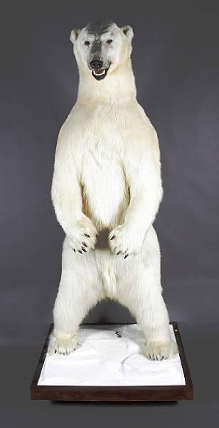 [lot+934+Polar+Bear.htm]