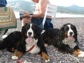 Trilli &Meghi in Corsica