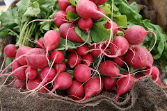 1000 radishes