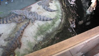 Manila Ocean Park: Oceanarium [April 2010] 4