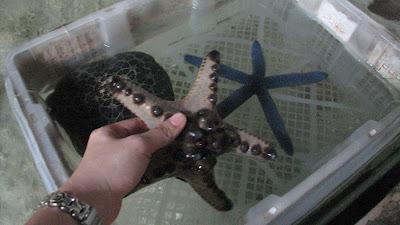 Manila Ocean Park: Oceanarium [April 2010] 7