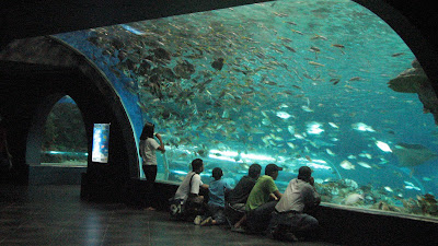 Manila Ocean Park: Oceanarium [April 2010] 1