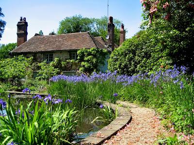iazul inconjurat de irisi