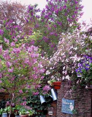 tipuri de liliac in luna aprilie
