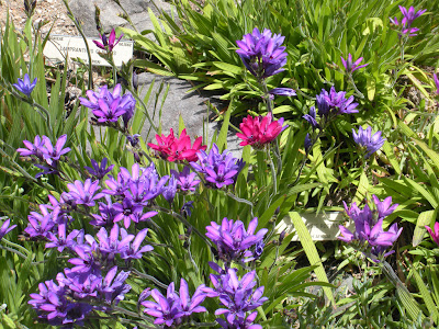 grup flori in gradina luna aprilie