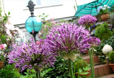 flori de primavara cu bulbi