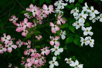 florile unei gradini romantice