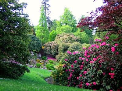 culorile florilor de rhododendron in gradina romantica