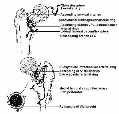 Akumahubelajar why femoral neck fracture have a poor capacity of why femoral neck fracture have a poor capacity of healing ccuart Image collections