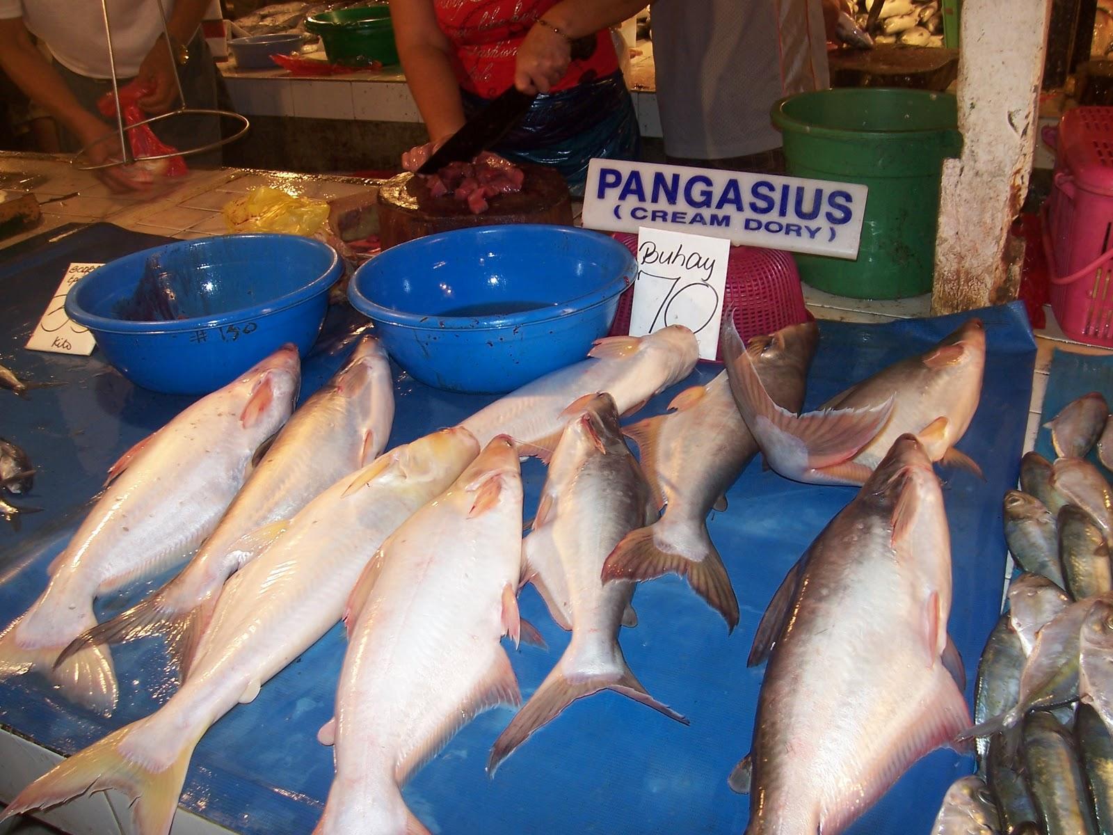 Mysterious Pangasius Fish 24