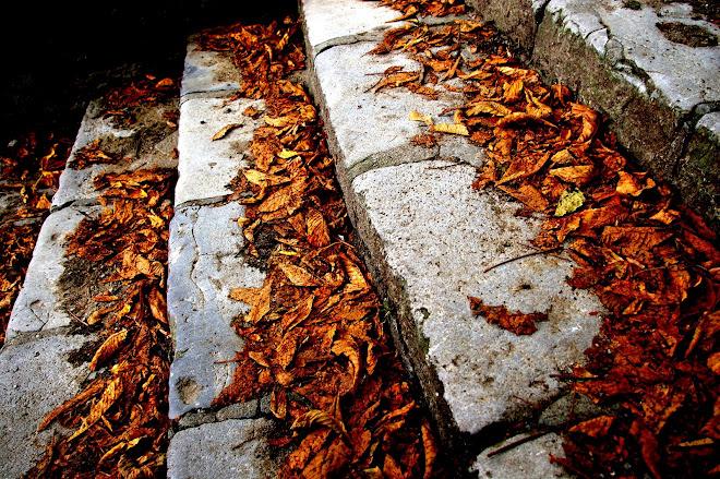 el otoño se adelanta.